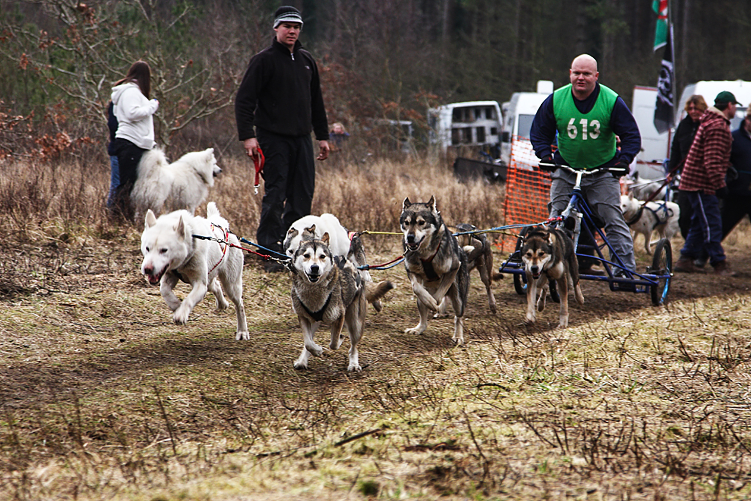 Husky Team, Pembrey Forest, South Wales.